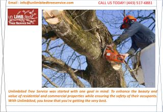 Tree Trimming Catonsville