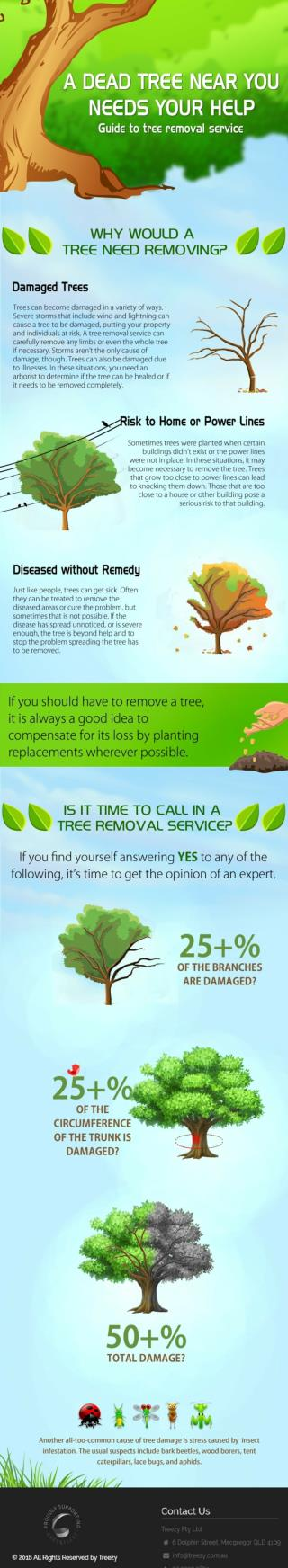Guide to Tree Removal Services