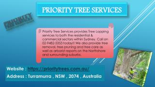 Priority Tree Services