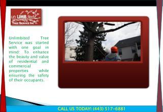 Tree Service Burtonsville