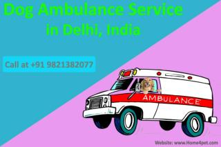 Dog Ambulance Service in Delhi, India | Call at 9821382077