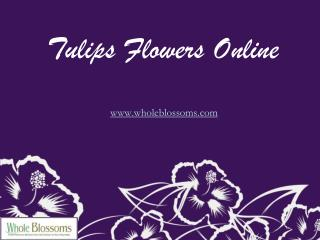 Tulips Flowers Online - www.wholeblossoms.com