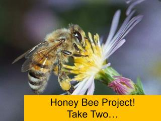 Honey Bee Project!  Take Two…