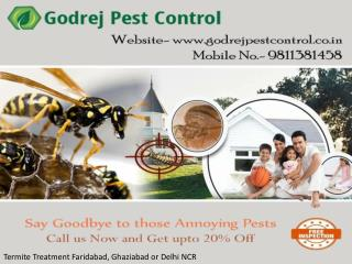 Looking for Termite Treatment Faridabad, Ghaziabad or Delhi NCR