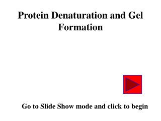 Protein Denaturation and Gel Formation