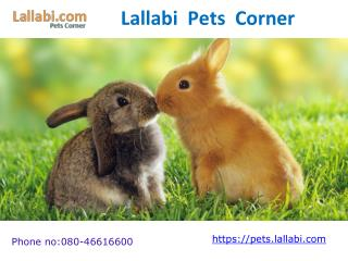 Online Pet Shop for Dogs/Cats/Birds/Parrot.Pet Food/Accessories Supplies India