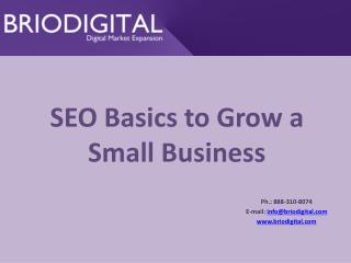 SEO Basics to Grow a Small Business