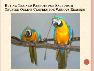 Trained Parrots for Sale