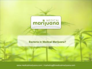 Bacteria in Medical Marijuana?