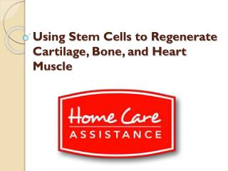 Using Stem Cells to Regenerate Cartilage, Bone, and Heart Muscle