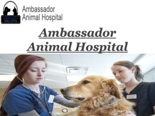 Ambassador Animal Hospital-Veterinarian Windsor