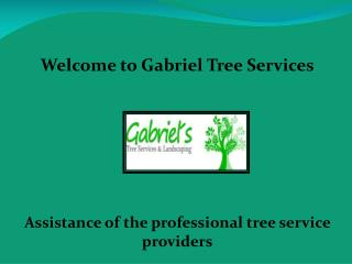 Tree Service in Los Angeles, Gabriel's Tree Services and Landscaping