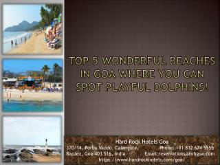 Top 5 Wonderful Beaches In Goa Where You Can Spot Playful Dolphins