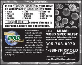 Looking for a mold removal company in Miami and Fort Lauderdale?