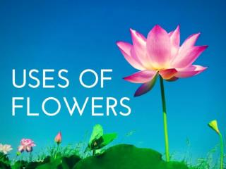 Uses of Flowers