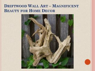 Driftwood Wall Art – Magnificent Beauty for Home Decor