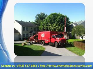 Tree Removal, Tree Service Maryland