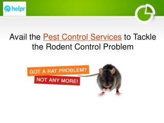 Avail the Pest Control Services to Tackle the Rodent Control Problem