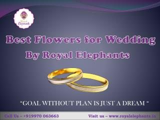 Best flowers For Wedding by Royal Elephants