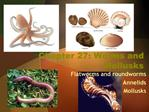 Chapter 27: Worms and Mollusks