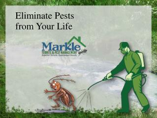 Eliminate Pests from Your Life