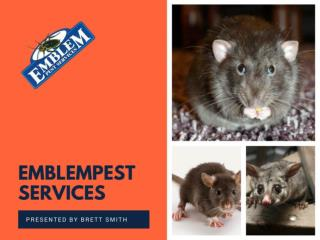 Signs that Say You Need to Hire a Termite Inspection Penrith Now
