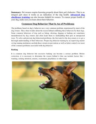 Dog Aggression Training Beverly Hills