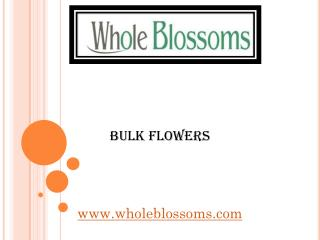 Bulk Flowers - wholeblossoms