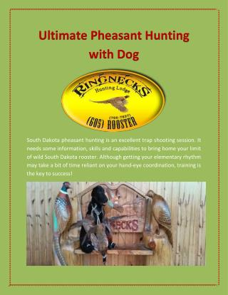 Ultimate Pheasant Hunting with Dog | Ringnecks Hunting Lodge