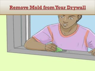 How to Remove Mold from Your Drywall?