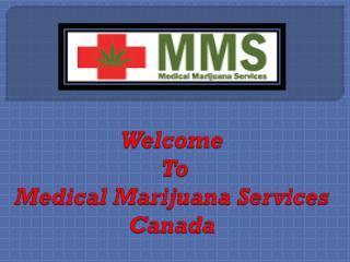 Take Medical Marijuana Treatment By Expert Doctors Team In Canada.