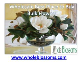 Best Place to Buy Bulk Flowers - www.wholeblossoms.com