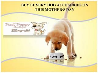 BUY LUXURY DOG ACCESORIES ON THIS MOTHER'S DAY