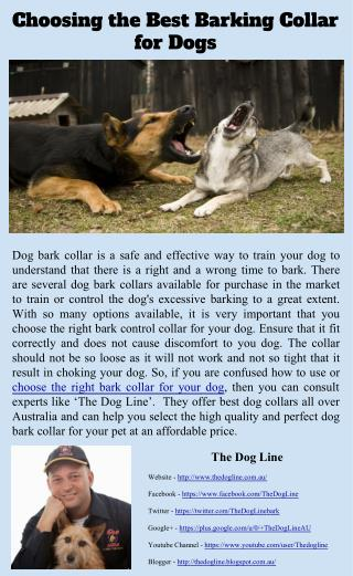 Choosing the Best Barking Collar for Dogs