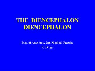 THE  DIENCEPHALON DIENCEPHALON