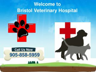 24 Hours Emergency Animal Hospital Mississauga