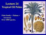 Lecture 24 Tropical Oil Palms