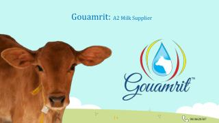 Buy Desi Cow Milk | A2 Milk | Gouamrit.in