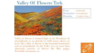 Valley Of Flowers Trek In Uttarakhand