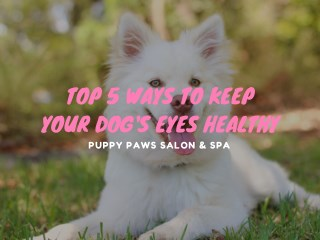 Top 5 Ways To Keep Your Dog's Eyes Healthy