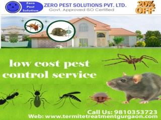 Are you looking for termite pest control services in Gurgaon
