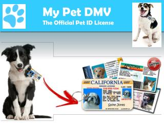 Official USA Made Drivers License ID For Dogs | My Pet DMV