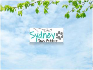Get Customized Screen Door for Dogs On Any kind of Door