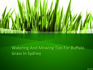 Watering And Mowing Tips For Buffalo Grass In Sydney