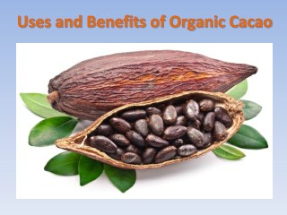 What Are the Benefits of Organic Cocoa Powder?