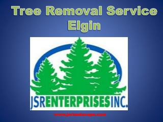 Best Low Cast Tree Removal and Landscaping services in Elgin
