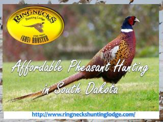 Affordable Pheasant Hunting in South Dakota