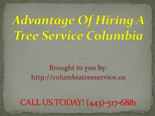 Columbia Tree Removal Service