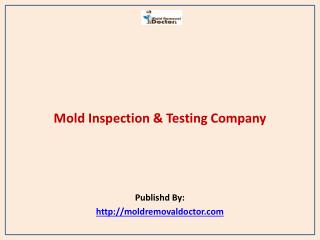 Mold Removal Doctor