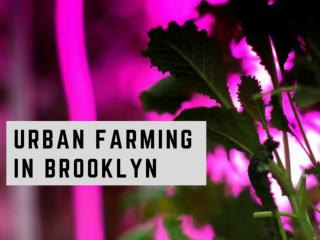 Urban farming in Brooklyn